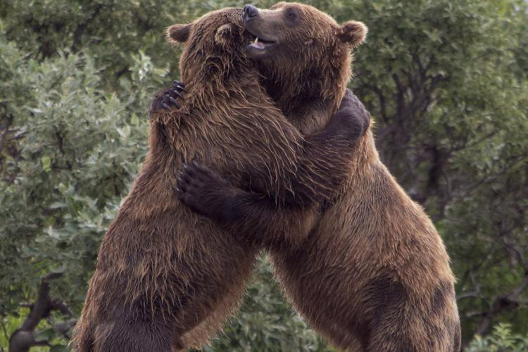 hug-gefiri